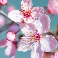 spring-1244156_1920