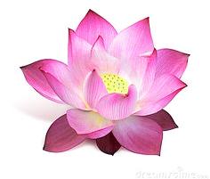Yogapraktijk Nieuwleusen - lotus community Ria Suyderhoud